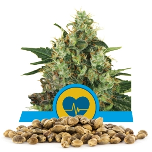Medical Mass Bulk Seeds
