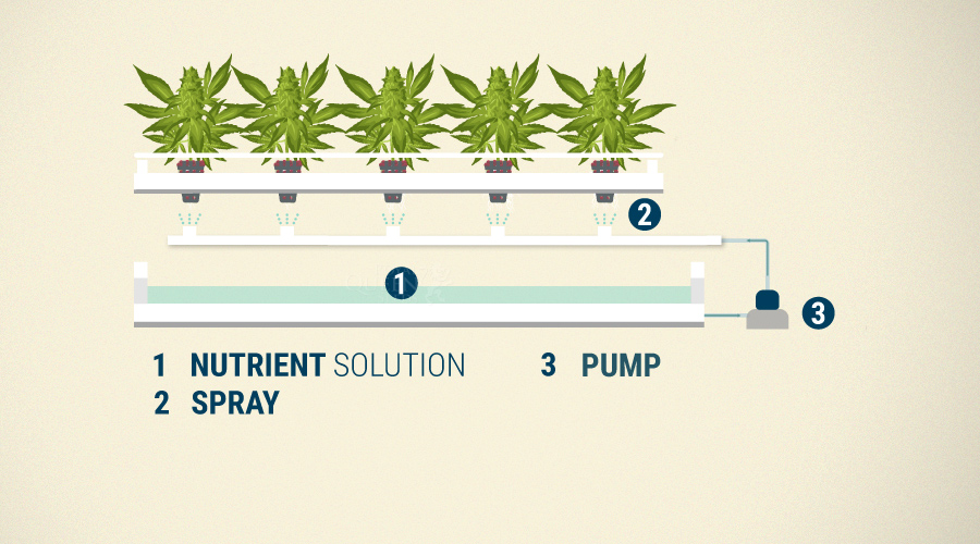 Hydroponics Cannabis Growing Guide - RQS Blog