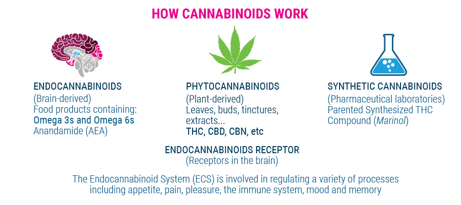 how cannabinoids work