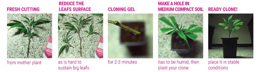 clones tutorial