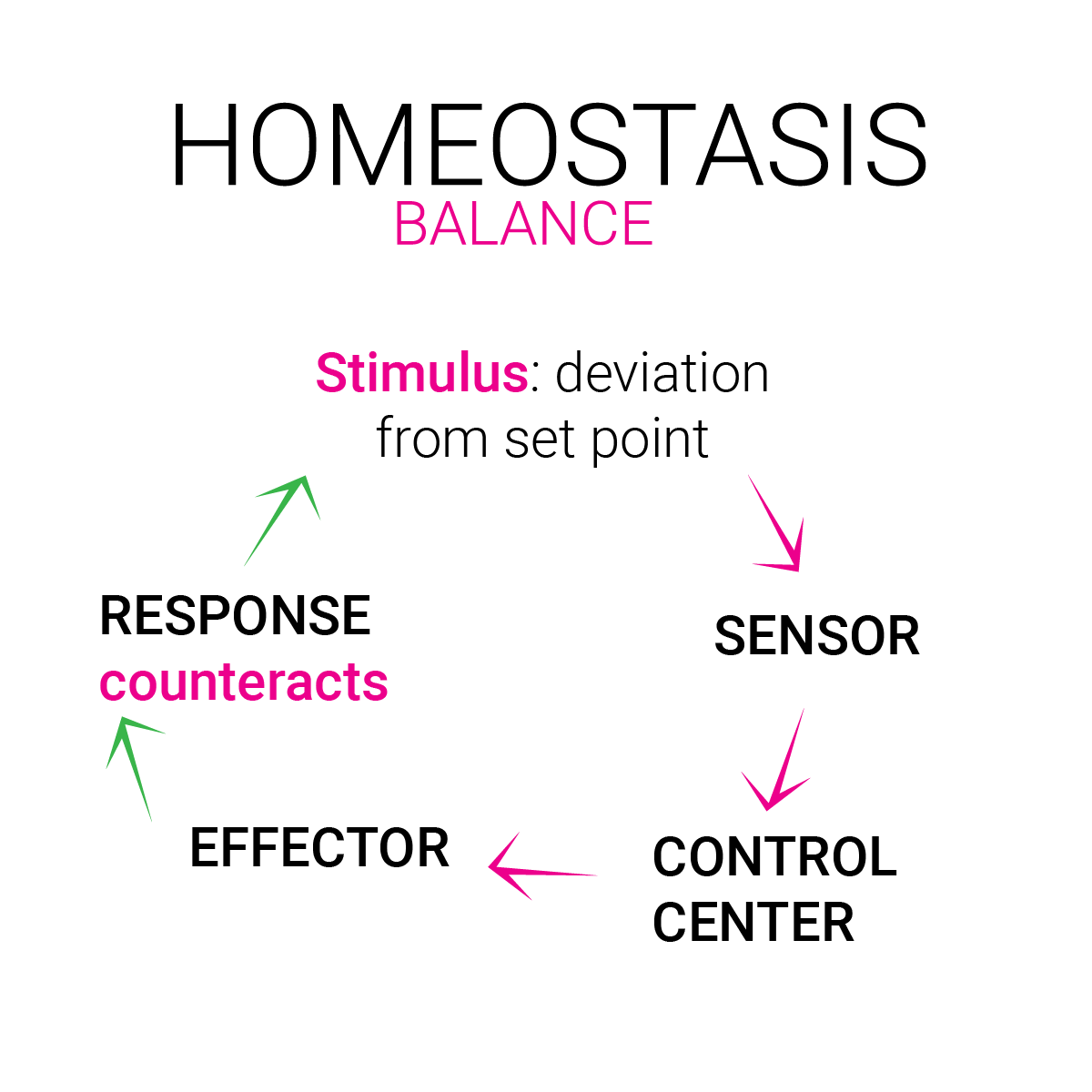 homeostasis menopause cannabis regulation balance