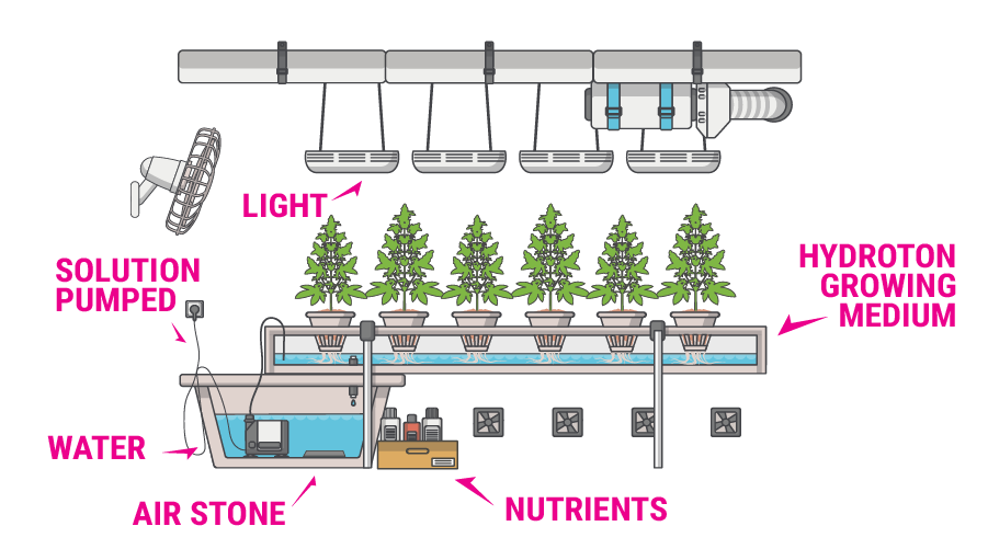 hydroponics cannabis growing guide rqs blog. Black Bedroom Furniture Sets. Home Design Ideas