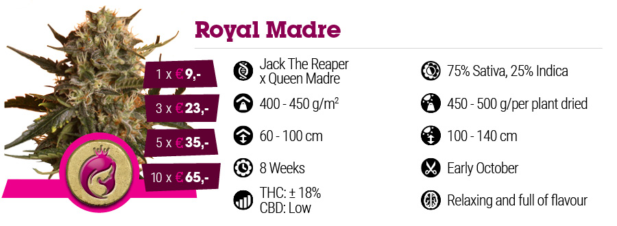 Royal Madre