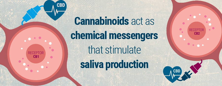 Cannabinoids Chemical Messengers Cotton Mouth