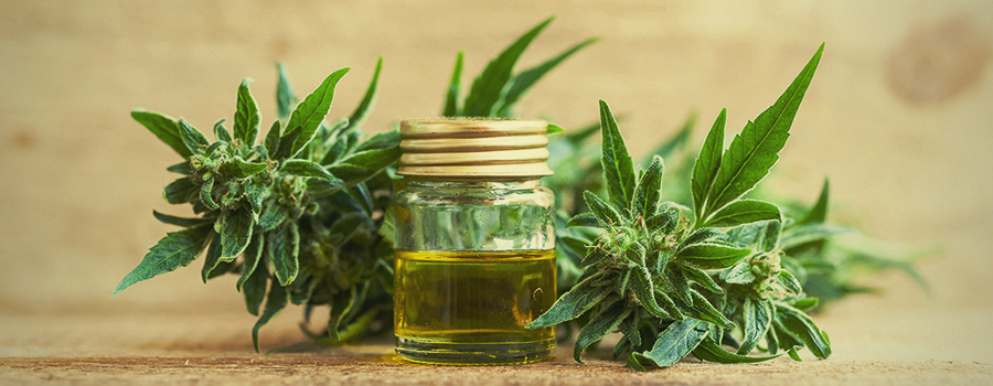 Kratom Vs  CBD: Which One Will Benefit You Most? - RQS Blog