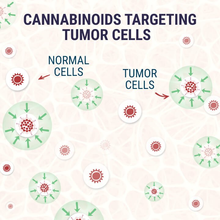 Cannabinoids-Targeting-Tumor-Cells
