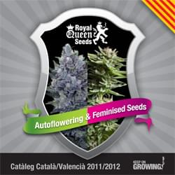 Catalonian Royal Queen Seeds feminized cannabis seeds catalogue