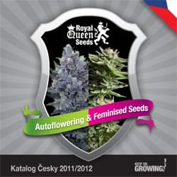 Czech Royal Queen Seeds feminized cannabis seeds catalogue