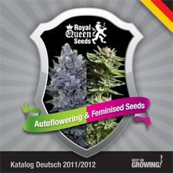 German Royal Queen Seeds feminized cannabis seeds catalogue