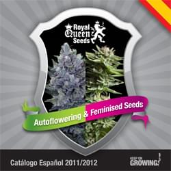 Spanish Royal Queen Seeds feminized cannabis seeds catalogue