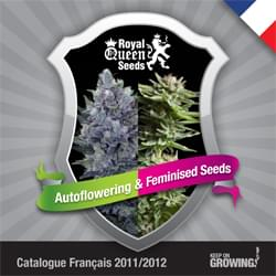 French Royal Queen Seeds feminized cannabis seeds catalogue