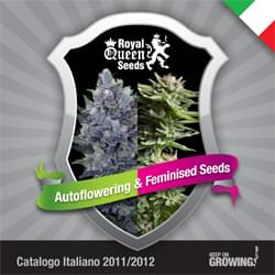 Italian Royal Queen Seeds feminized cannabis seeds catalogue