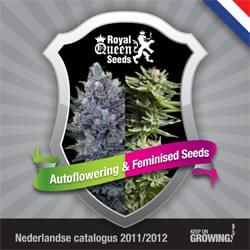 Dutch Royal Queen Seeds feminized cannabis seeds catalogue