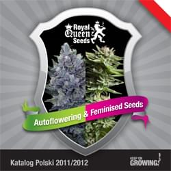 Polish Royal Queen Seeds feminized cannabis seeds catalogue