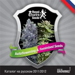 Russian Royal Queen Seeds feminized cannabis seeds catalogue