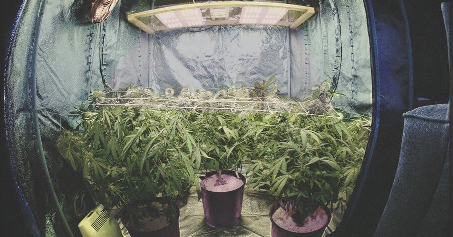 The Ultimate Guide To Indoor Cannabis Growing Equipment