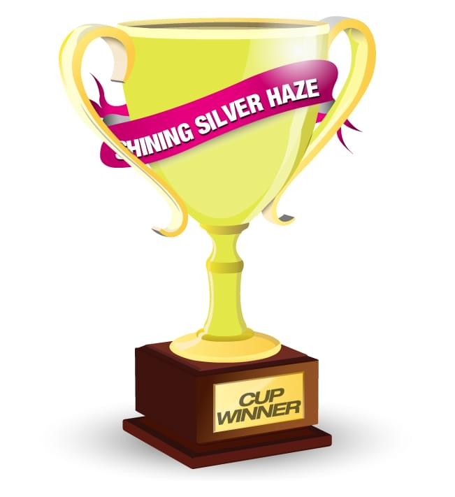 Royal Queen Seeds Shining Silver Haze Cannabis Cup Winner