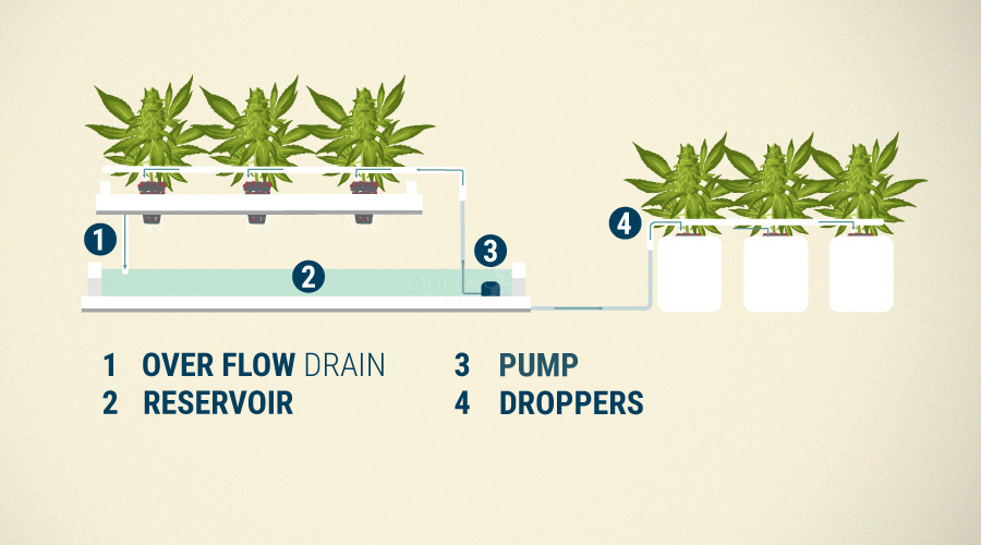 Drip Irrigation With Cannabis Cultivation - RQS Blog
