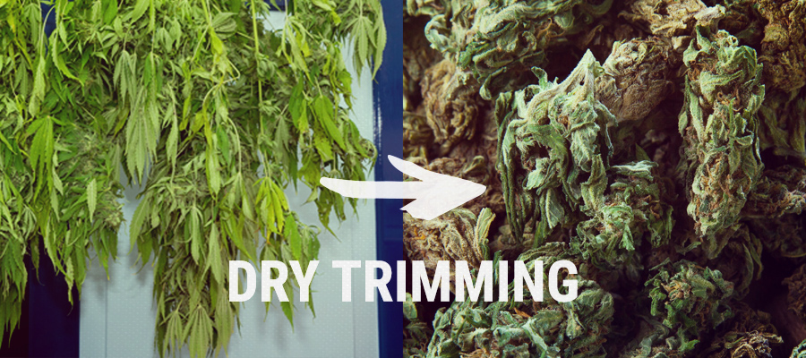 crop box vs trim box
