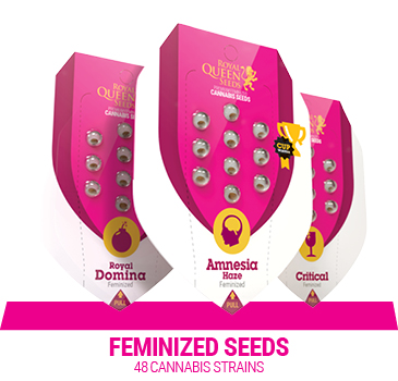 feminized-cannabis-seeds
