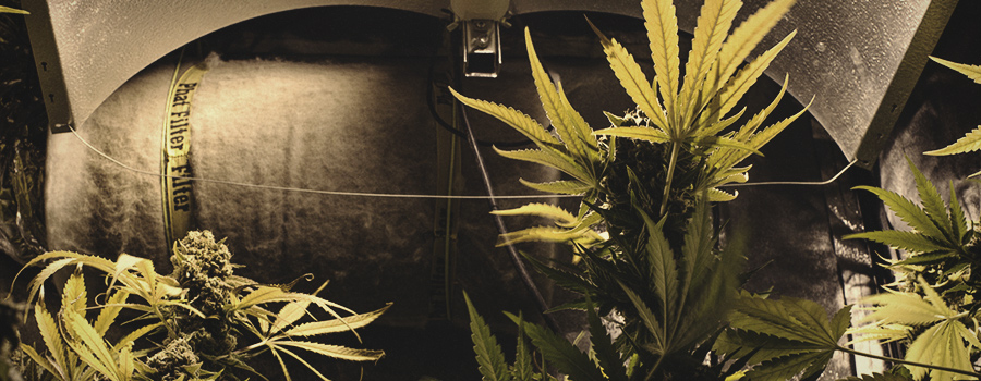 Keep Noise Outside Grow Room When Growing Cannabis
