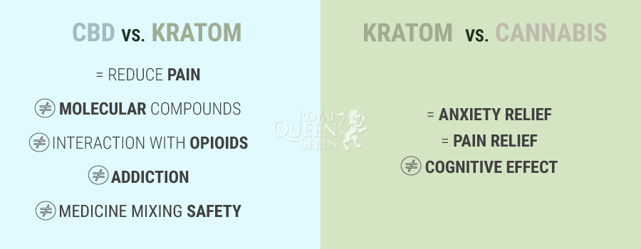 CBD VS. Cannabis VS. Kratom