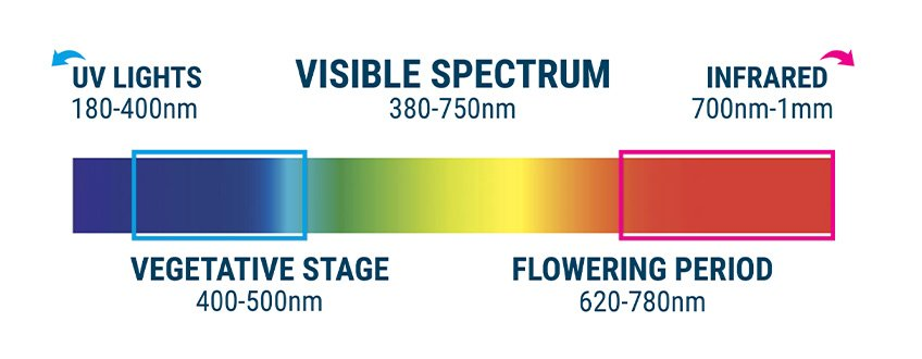 INCORRECT LIGHT SPECTRUM