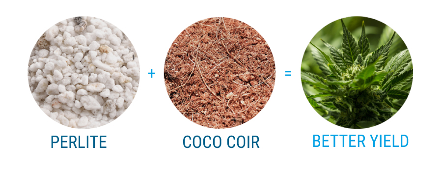 Growing cannabis with coco coir for Soil vs coco