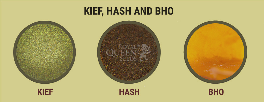 How To Cook With Cannabis Concentrates Like Kief, Hash, And