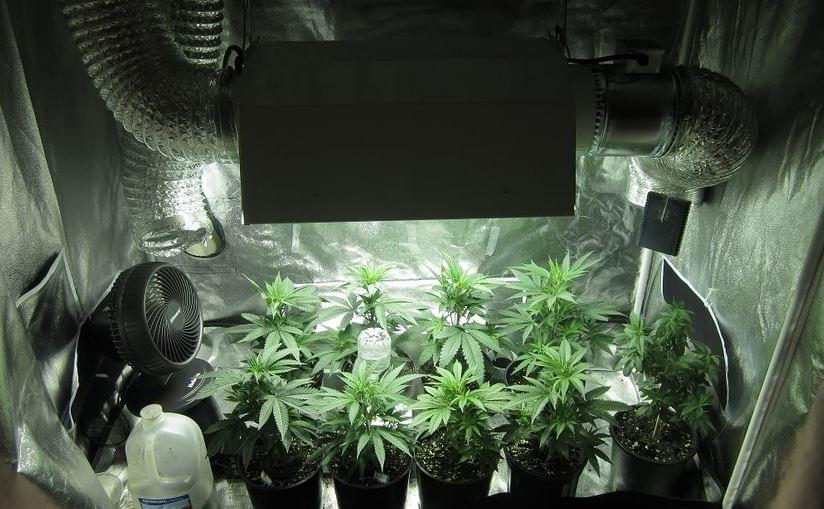 cannabis grow tent & Building your own Grow Room - Royal Queen Seeds