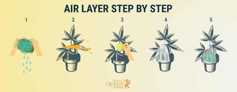 Air Layer Step by Step
