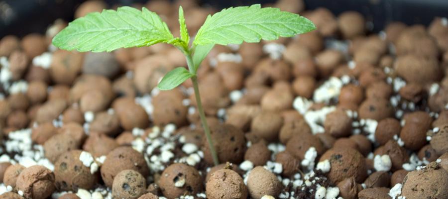 saucer cannabis runoff water pot