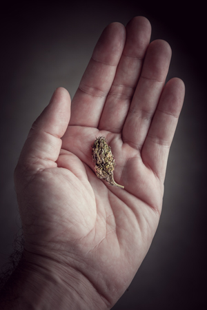 microdosing cannabis consume safely benefits