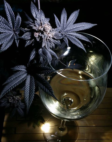 WINE CANNABIS LEGALIZATION TERPENES ENZYMES