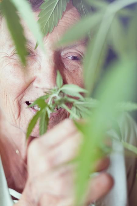 Parkinson Cannabis Royal Queen Medical Strain Chronic pain Alzheimer Arthritis Depression