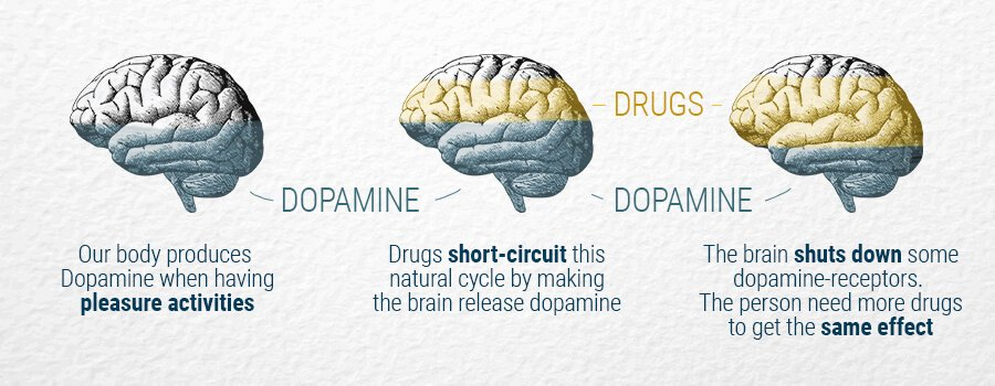 Brain and Dopamine With Drugs