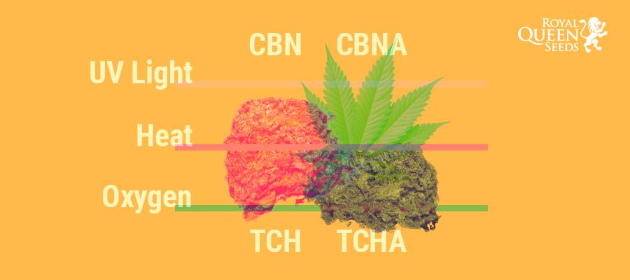 THCA, CBNA, CBD, THC