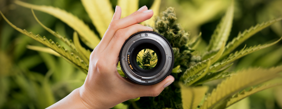 Camera Setup Lenses Cannabis Photography