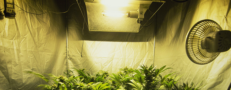 Indoor Growing Lightning And Temperature