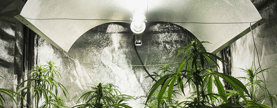 Cannabis Lightning Indoor Cultivation