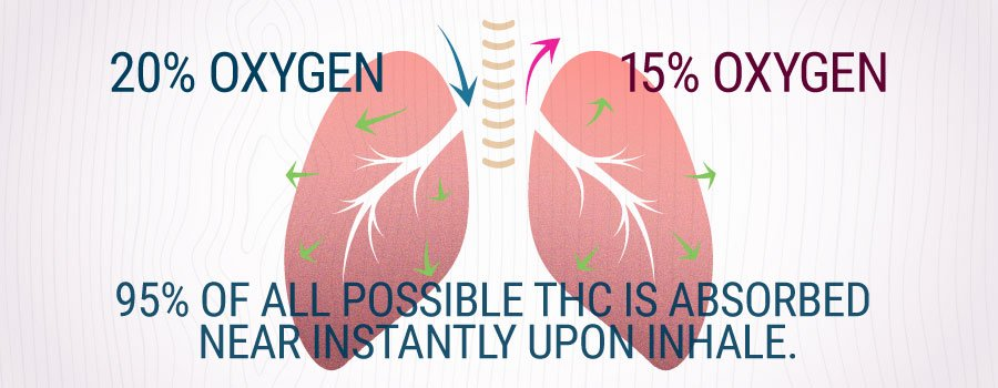 Lungs Inhaling Smoke Of Cannabis Explanation
