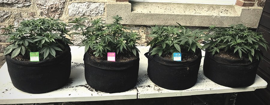 Smart Pot with Handles for Outdoor Cultivation