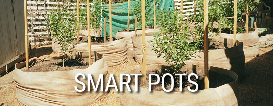 Smart Pots Cannabis Cultivation
