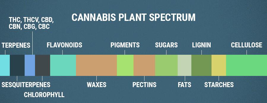 Cannabis Plant Spectrum Flavonoids
