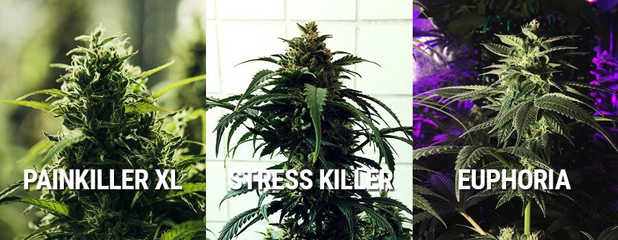 Marijuana Euphoria, Painkiller XL and Stress Killer