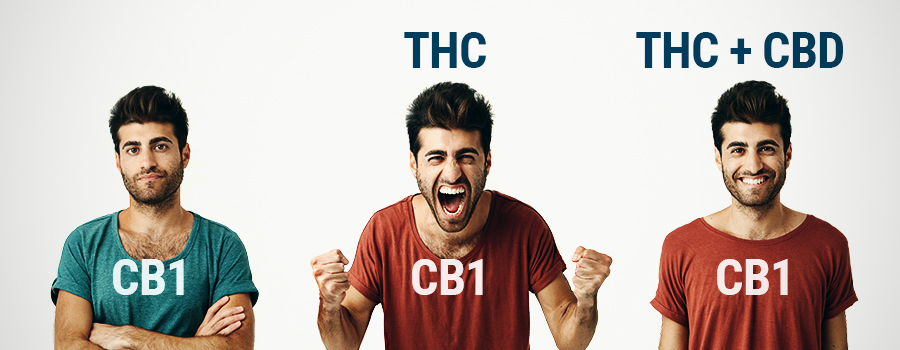 WHO THC And CBD