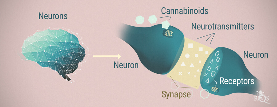 Neurons, Cannabinoids and Neurotransmitters