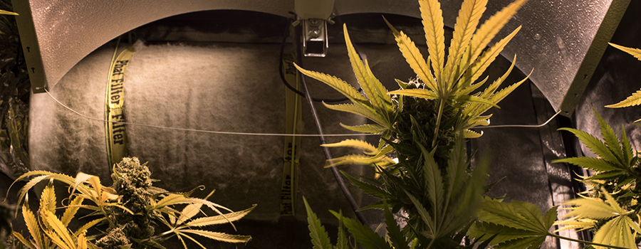 soundproof growroom cannabis cultivation indoor
