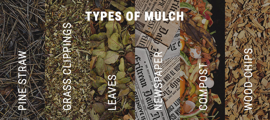Types of Mulch For Cannabis Cultivation