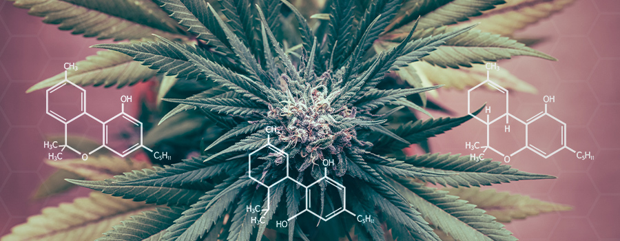 Cannabinoids Regulation Inflammation